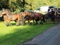 Attelage_Ardennais_Belges_route_Suisse_Normande_ville_4029