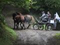 ATTELAGE_ARDENNAIS_BELGES_route_Suisse_Normande_routier_5409