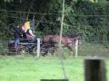 ATTELAGE_ARDENNAIS_BELGES_route_Suisse_Normande_routier_5454