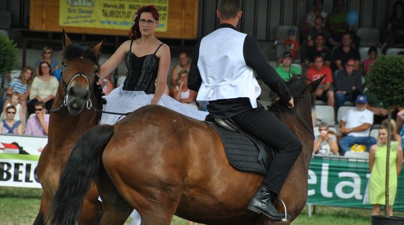 Les Ardennais Belges à La foire Agricole de Libramont 2015
